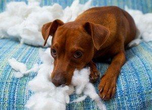 naughty-puppy