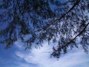 blue-sky-1317014-640x480
