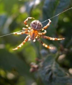 spider-1556960-639x754